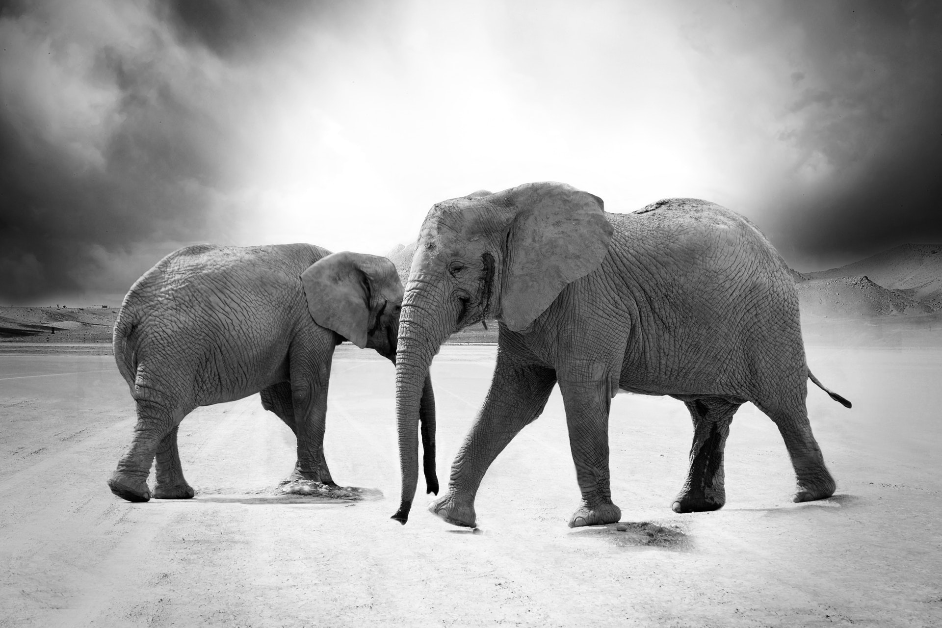 Stomping The Elephant